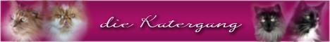 banner  katze